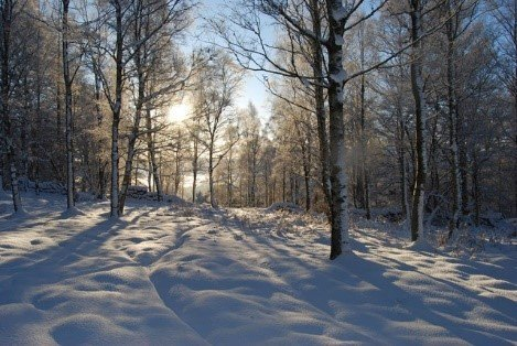 A Winter Walk in the Woods